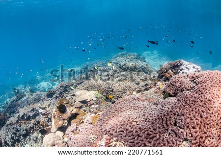 Sunbeams illuminate tropical fish and healthy, colorful coral on a tropical reef - stock photo