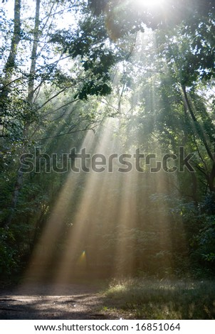 Sunbeams in a forest on a foggy morning. - stock photo