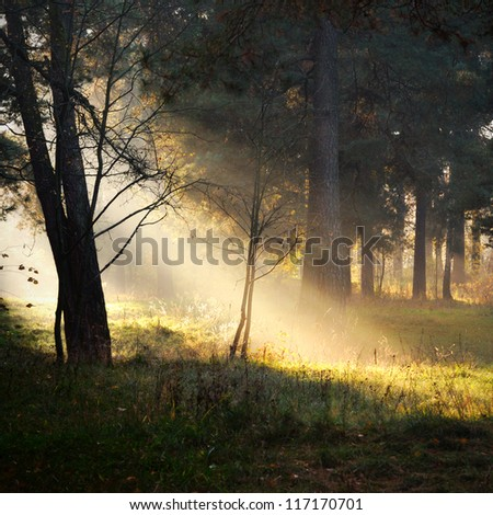 sunbeams in fog in the forest - stock photo