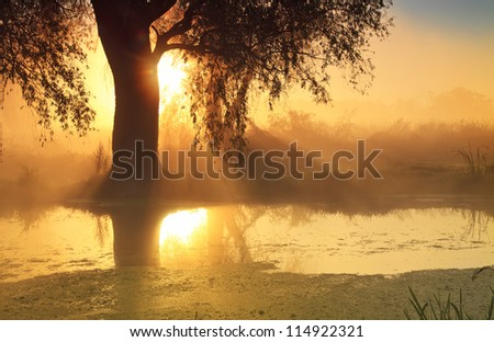 Sunbeams in misty morning on the river - stock photo