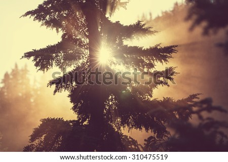 Sunbeams in morning summer forest - stock photo
