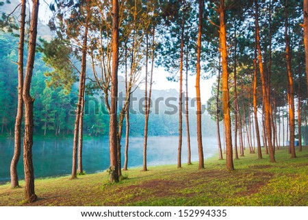 Sunbeams in Natural Spruce Woodland - stock photo