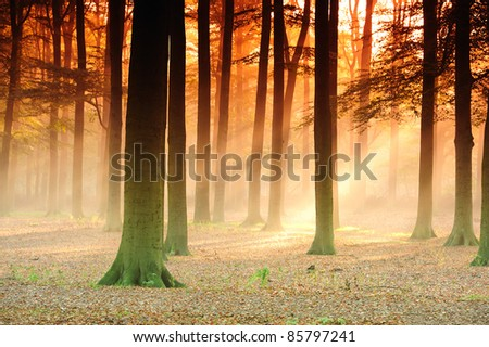 Sunbeams in the  forest in the early morning. - stock photo