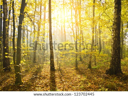 Sunbeams pour into the autumn forest