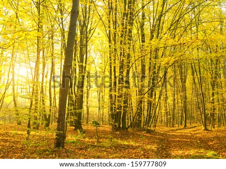 Sunbeams pour into the autumn forest. Nature composition.