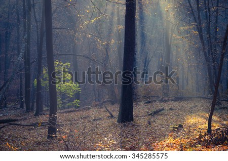 Sunbeams pour into the dark autumn forest - stock photo