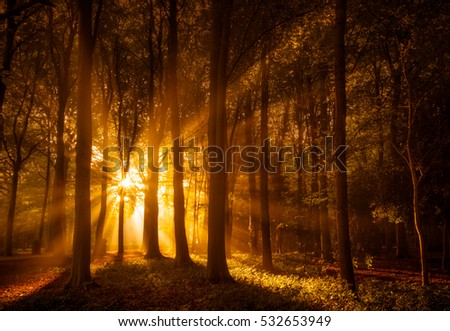 Sunbeams shining through a misty forest