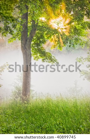 sunbeams shining through the foliage of maple tree - stock photo