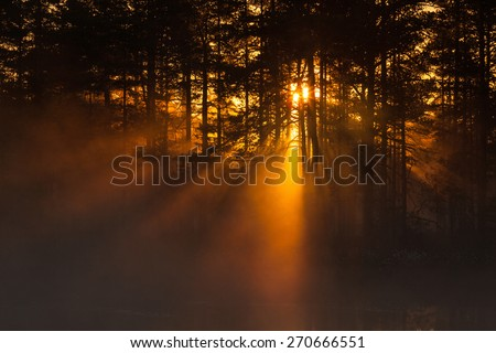 Sunbeams shining through the forest at sunrise - stock photo