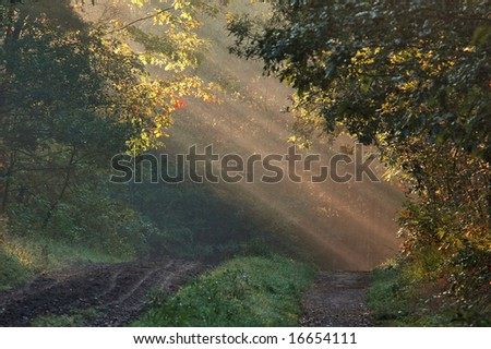 sunbeams through the leafs - stock photo
