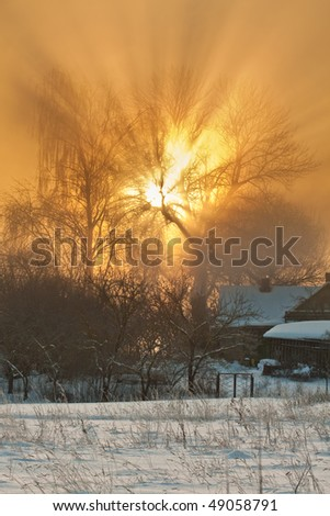 Sunbeams through the tree in winter - stock photo