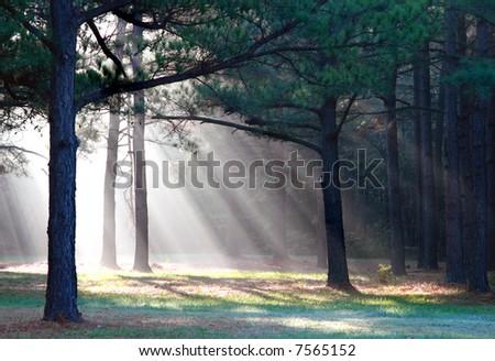 sunbeams through trees - stock photo