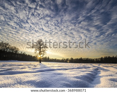 sundown on a clearing with a silhouette of a lonely tree - stock photo