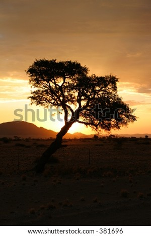 Sundowner with Tree