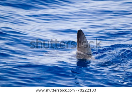 sunfish fin coming out water as a shark metaphor blue sea - stock photo