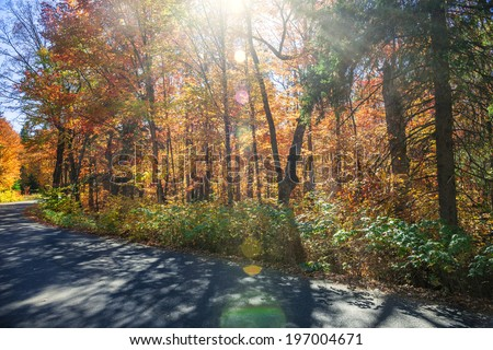 Sunflare in colorful fall forest with country road. Algonquin Provincial park, Ontario, Canada. - stock photo