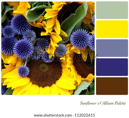 Sunflower and allium background colour palette with complimentary swatches. - stock photo