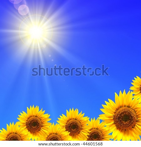 sunflower and blue sky showing summer concept - stock photo