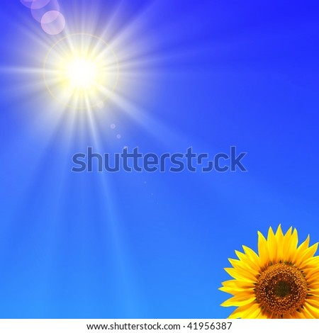 sunflower and blue sky showing summer concepty - stock photo