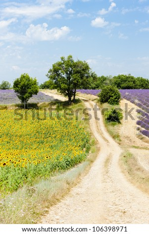 sunflower and lavender fields, Plateau de Valensole, Provence, France - stock photo