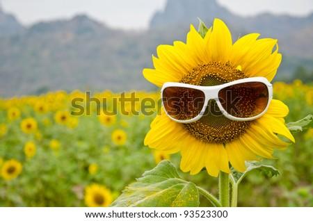 sunflower and sunglasses - stock photo
