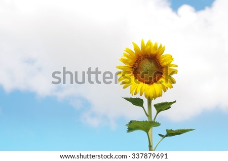 Sunflower Color the sky background