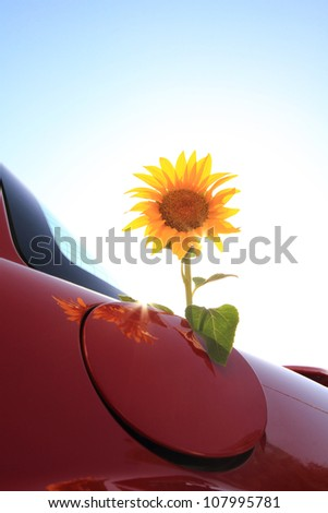 Sunflower come out of a vehicle's gas tank - stock photo