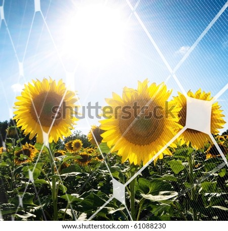 Sunflower field against the sun with photovoltaic panel pattern - stock photo