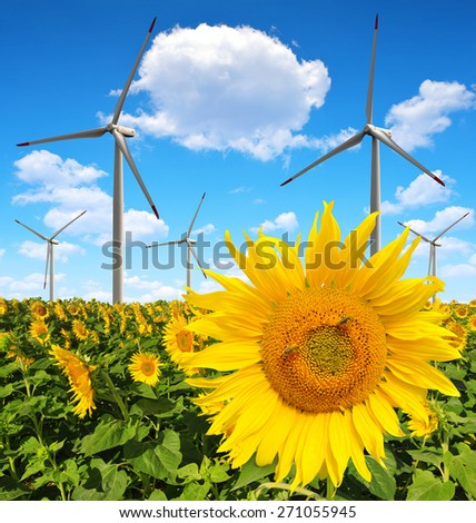 Sunflower field with wind turbines. Spring landscape.