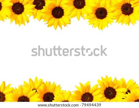 sunflower frame - stock photo