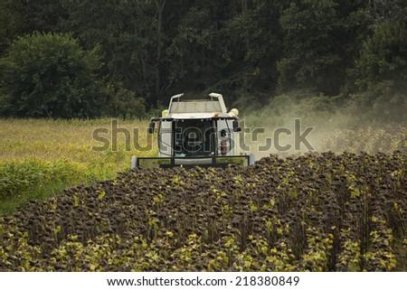 sunflower harvest - stock photo