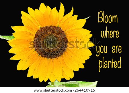 Sunflower illustration against black with bloom where you are planted quote.  Fractal style manipulation giving a glowing style look. - stock photo