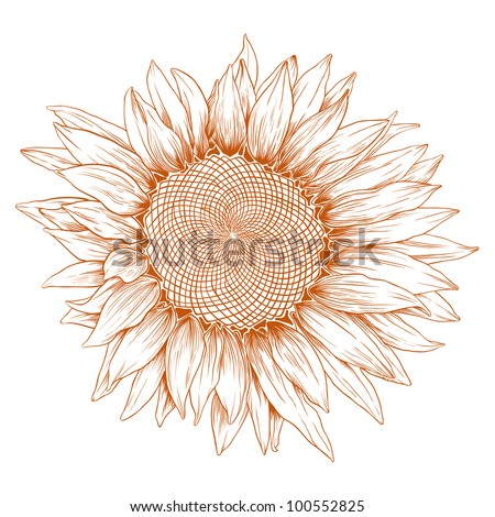 Handdrawn Blooming Sunflower Ethnic Floral Doodle Stock