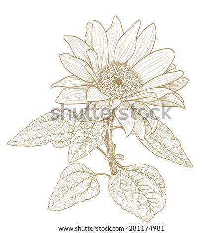 sunflower monochrome drawing on white - stock photo