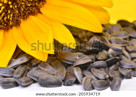 Sunflower oil - stock photo