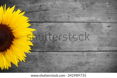 sunflower on old wood