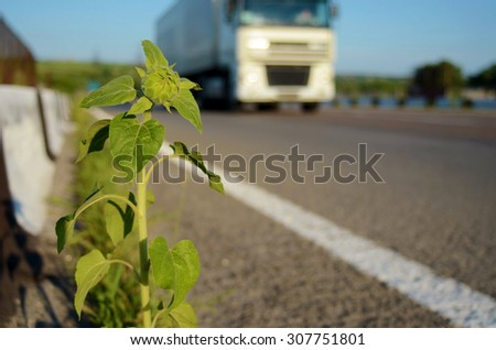 Sunflower on the road and a truck (delivery of goods, freight transportation - concept) - stock photo