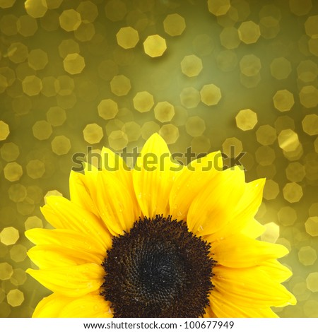 Sunflower on yellow background - stock photo