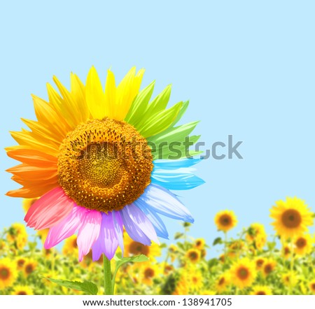 Sunflower painted in different colors - stock photo