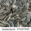sunflower seeds background - stock photo