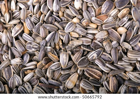 Sunflower seeds close-up as background - stock photo