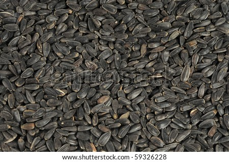 Sunflower seeds close up as background - stock photo
