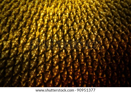 Sunflower seeds extreme macro. Background made of rows of sunflower seeds - stock photo