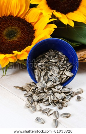 Sunflower seeds in the hull spill from a blue bowl in front of yellow sunflowers, includes copy space