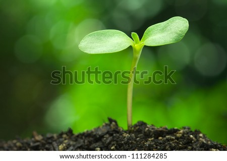 Sunflower sprout on vivid green bokeh background.(horizontal) - stock photo