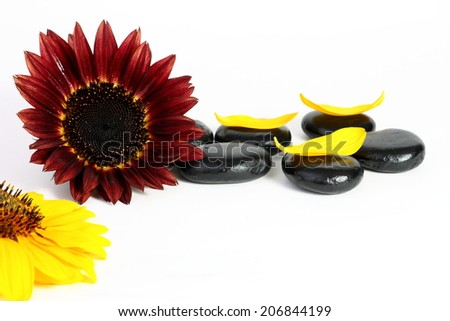 Sunflower stones and petals on white background - stock photo