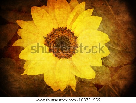 sunflower - vintage stylized picture with patina texture - stock photo
