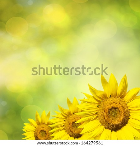 Sunflower with beautiful summer background