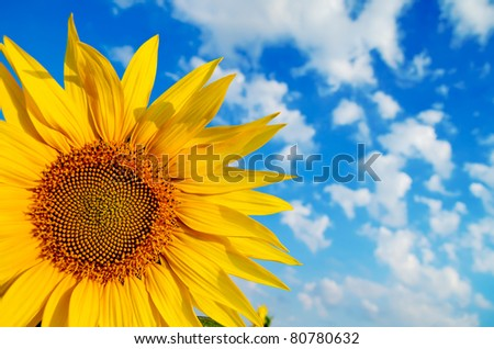 sunflower with cloudy sky over it - stock photo