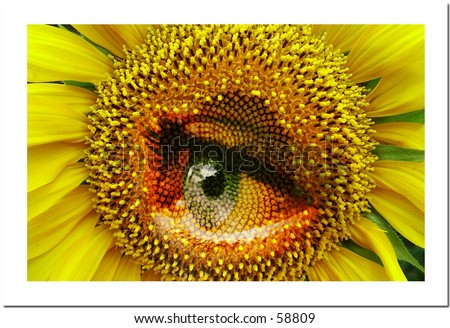 Sunflower with eye - stock photo